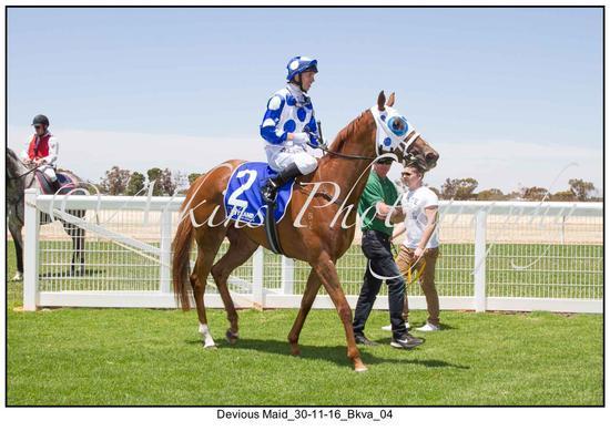 Devious Maid Racehorse