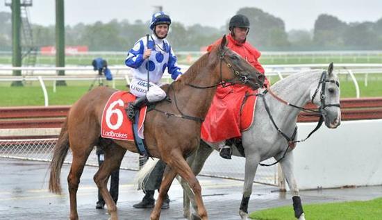 Miss Wonderland Racehorse
