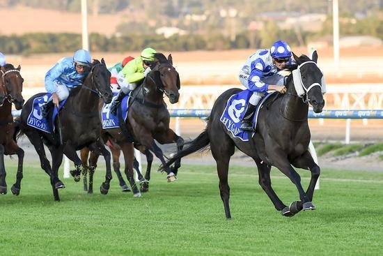 Gennikay Racehorse