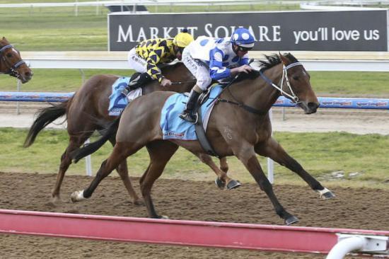 Apple Thief Racehorse