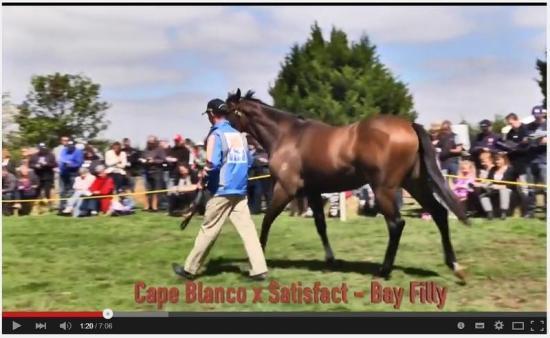 Cape Blanco Racehorse