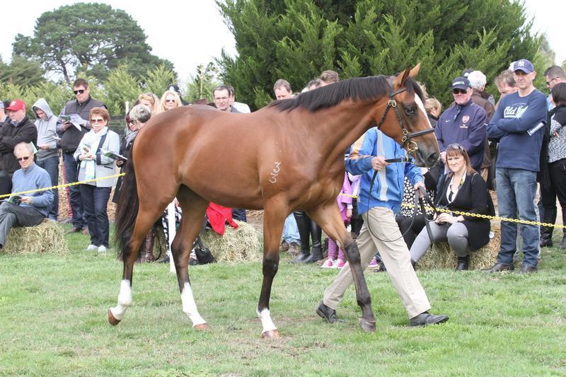 Great Opportunity Classic NZ Fillies