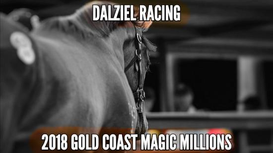 2018 Magic Millions Video – Expressions of Interest