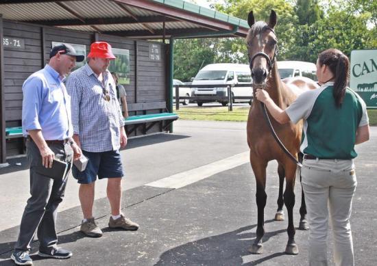 Racehorse Syndication