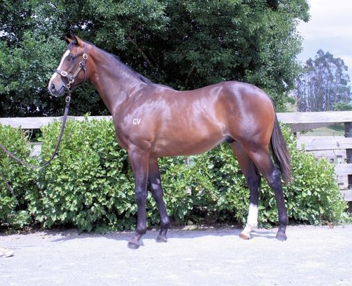 Racehorse Syndicators Australia
